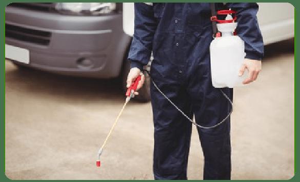 Pest Controllers In Bendigo
